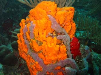 Isla Bonita Aruba