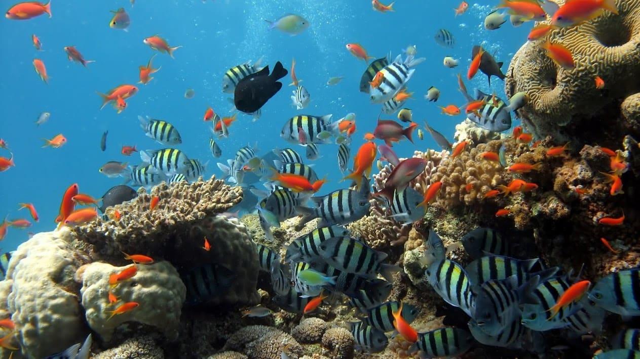 mermaid-dive-center-aruba-593-3920