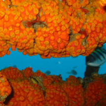 dive_sites_sonesta_reef