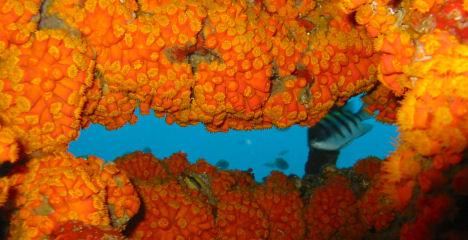 dive_sites_sonesta_reef